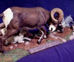 Danny Salcines' Aurora Wildlife kits